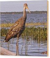 Limpkin Bird Wood Print
