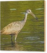 Limpkin With A Snack Wood Print