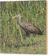 Limpkin With Apple Snail Wood Print