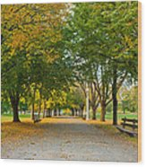 Lincoln Park In Fall Wood Print