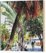 Lincoln Road In Miami Beach Wood Print