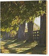 Line Of Maple Trees Along Rural Road In Wood Print