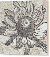 Linear Coneflower Wood Print