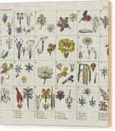 Linne's Plant System Wood Print