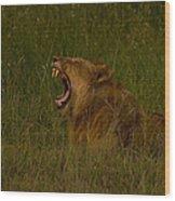 Lion   #1050 Wood Print