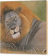 Lion At Rest Wood Print