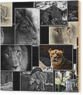 Lion Collage Wood Print