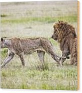 Lion Couple Wood Print