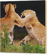 Lion Cubs Playing In The Grass Wood Print