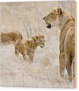 Lion Family Wood Print