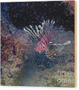 Lion Fish on The Reef Wood Print