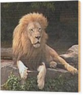 Lion Hanging Out Two Wood Print