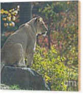 Lion In Autumn Wood Print