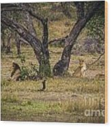 Lion In The Dog House Wood Print