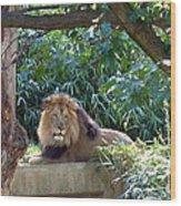 Lion King At Washington Zoo Wood Print