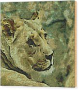 Lion Looking Back Wood Print