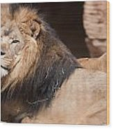 Lion Portrait Of The King Of Beasts Wood Print