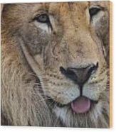 Lion Portrait Panting Wood Print