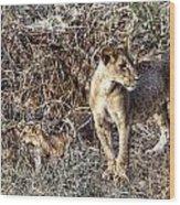 Lion Pride Wood Print