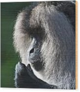 Lion Tailed Macaque Wood Print