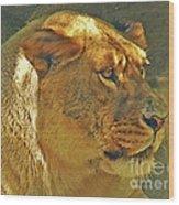 Lioness 2012 Wood Print