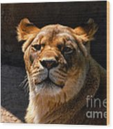Lioness Hey Are You Looking At Me Wood Print