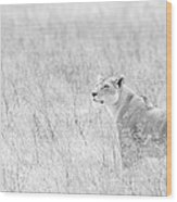 Lioness In Black And White Wood Print