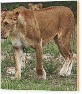 Lioness On The Masai Mara Wood Print