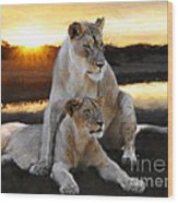Lioness Protector Wood Print