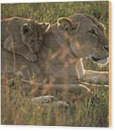 Lioness With Cub Wood Print