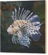 Lionfish - Gatlinburg Tn Ripleys Aquarium Wood Print by Dave Allen