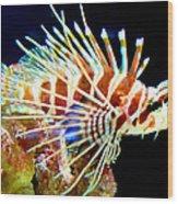 Lionfish 1 Wood Print