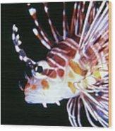 Lionfish 3 Wood Print