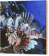 Lionfish 4 Wood Print