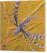 Lionfish Against Yellow Fan Coral Wood Print