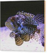 Lionfish Dendriochrius Barberi Wood Print by Karon Melillo DeVega