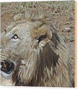 Lions Head Wood Print