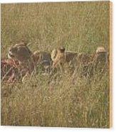 lions in the Maasai Mara park in kenya Wood Print