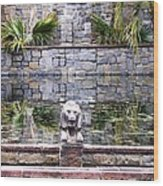 Lions In The Renaissance Court Fountain 2 Wood Print