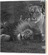 Lions Me And My Guy Wood Print