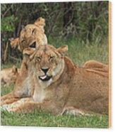 Lions Of The Masai Mara  Wood Print