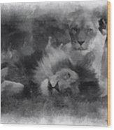 Lions Photo Art 01 Wood Print