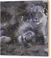 Lions Photo Art 02 Wood Print