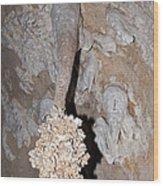 Lions Tail Carlsbad Caverns National Park Wood Print