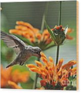 Lionstail Hummer Wood Print
