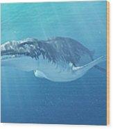Liopleurodon Marine Reptile, Artwork Wood Print