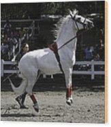 Lipizzaner Stallion Jumping Wood Print