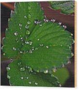 Liquid Pearls On Strawberry Leaves Wood Print