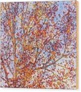 Liquidambar Square Abstract Wood Print