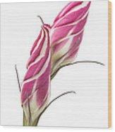 Lisianthus Love Wood Print